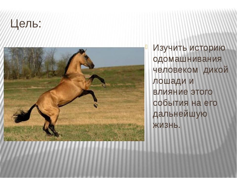 Цель: Изучить историю одомашнивания человеком дикой лошади и влияние этого со...