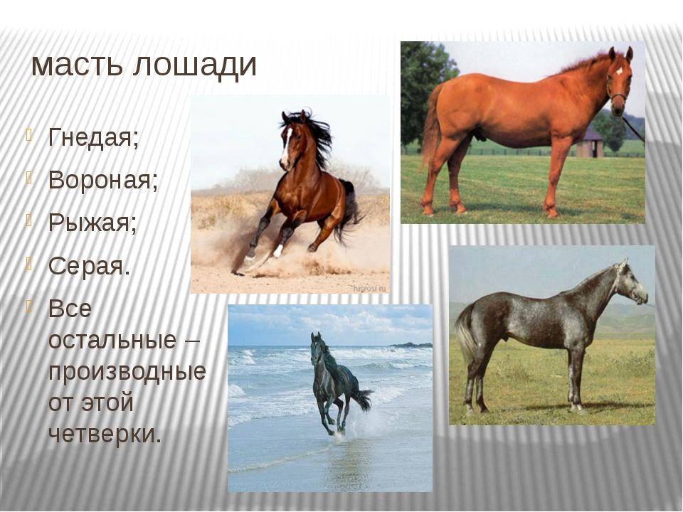 масть лошади Гнедая; Вороная; Рыжая; Серая. Все остальные – производные от эт...