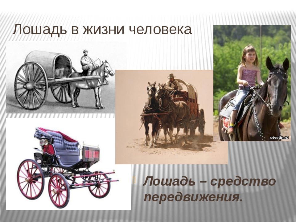 Лошадь в жизни человека Лошадь – средство передвижения.