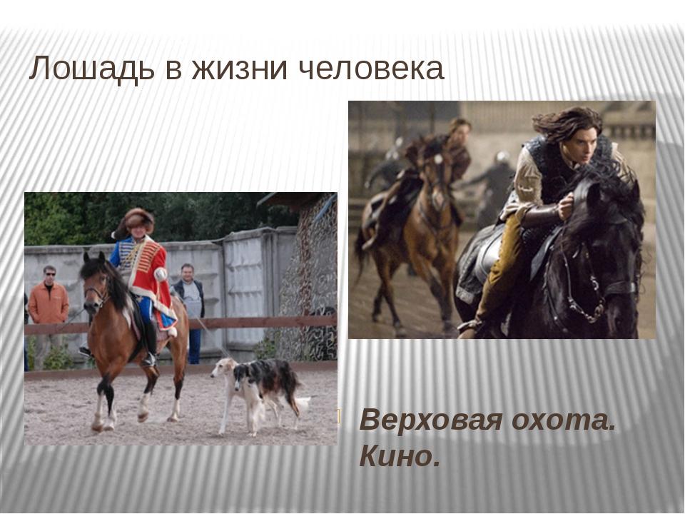 Лошадь в жизни человека Верховая охота. Кино.