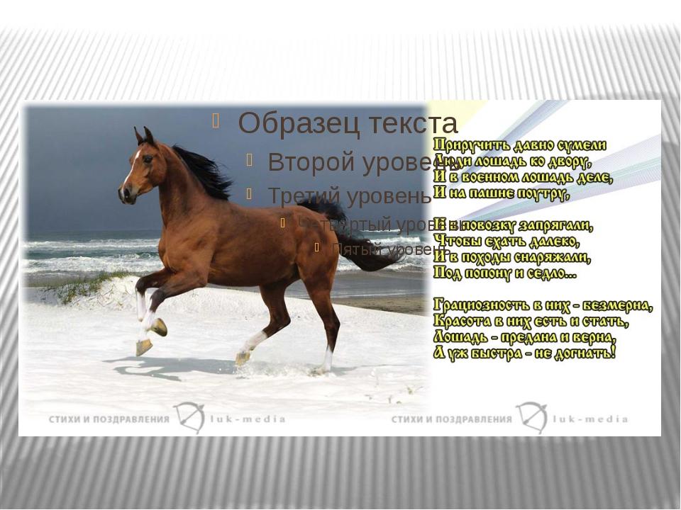 вопрос про стихи про конный спорт до слез очень простой