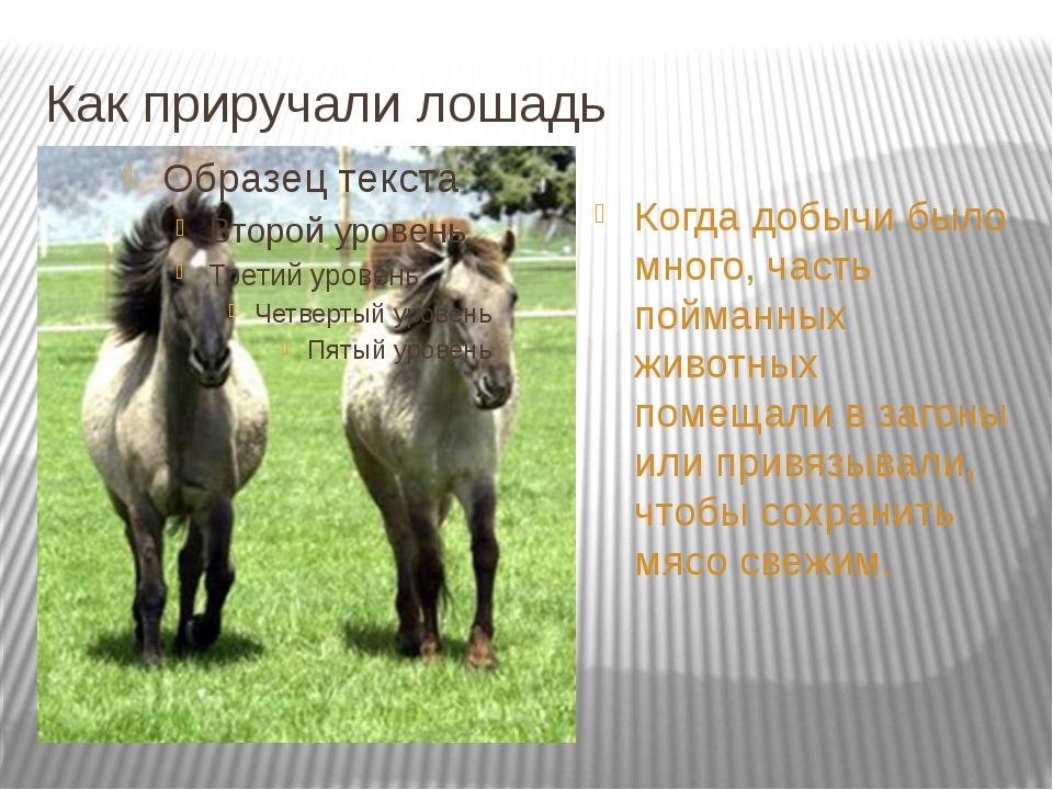 Как приручали лошадь Когда добычи было много, часть пойманных животных помеща...