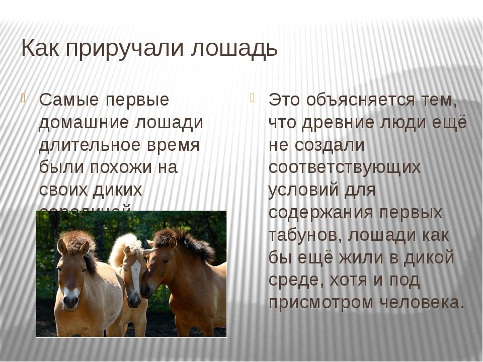 Как приручали лошадь Самые первые домашние лошади длительное время были похож...