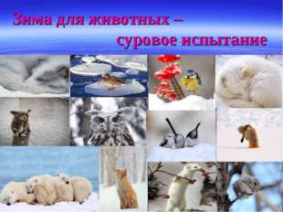 Зима для животных – суровое испытание
