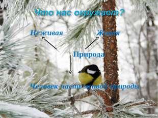 Неживая Живая Природа Человек-часть живой природы