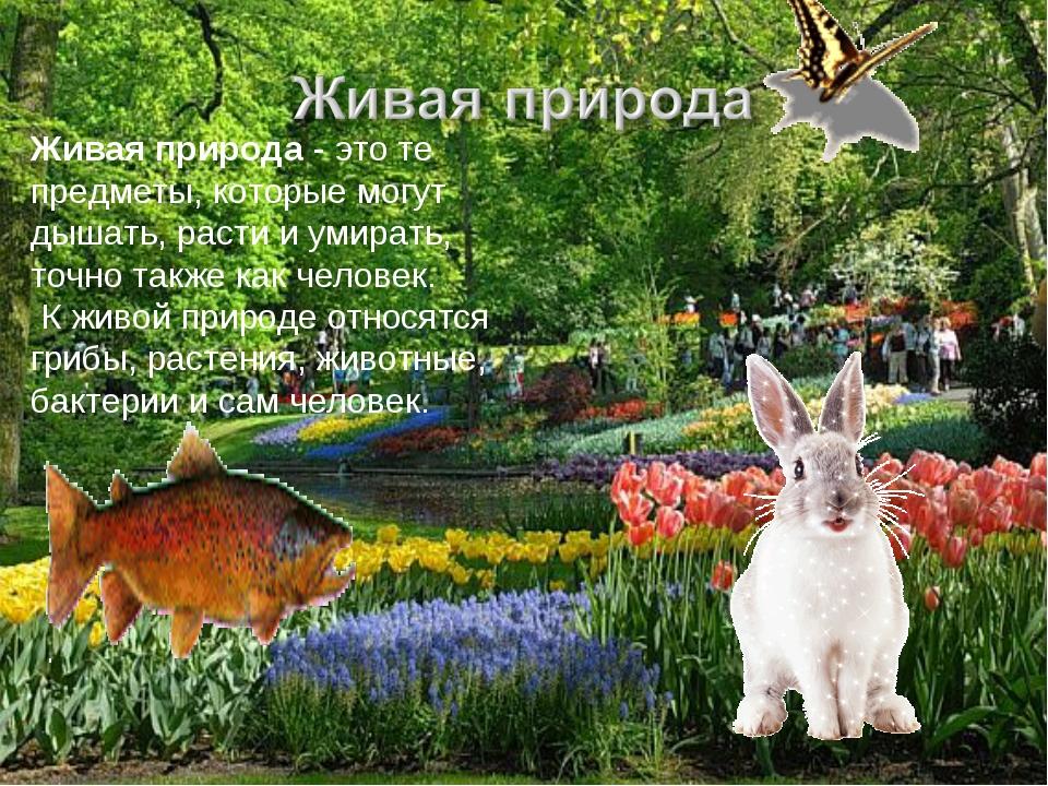 Живая природа- это те предметы, которые могут дышать, расти и умирать, точно...