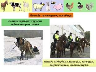 Лошадь необходима лесникам, пастухам, пограничникам, милиционерам. Лошади пер