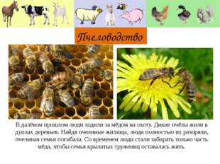 Пчеловодство В далёком прошлом люди ходили за мёдом на охоту. Дикие пчёлы жи