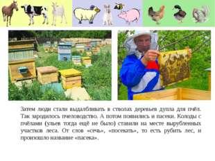 Затем люди стали выдалбливать в стволах деревьев дупла для пчёл. Так зародило