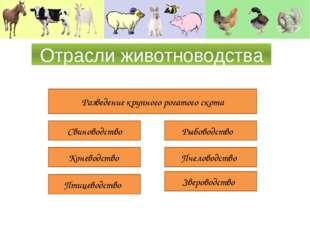 Отрасли животноводства Разведение крупного рогатого скота Свиноводство Конево