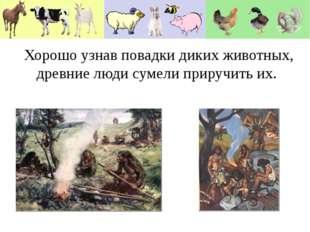 Хорошо узнав повадки диких животных, древние люди сумели приручить их. Хорошо