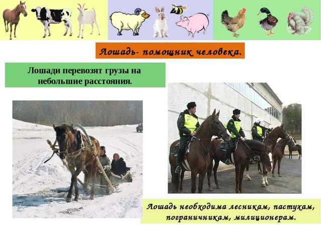 Лошадь необходима лесникам, пастухам, пограничникам, милиционерам. Лошади пер...