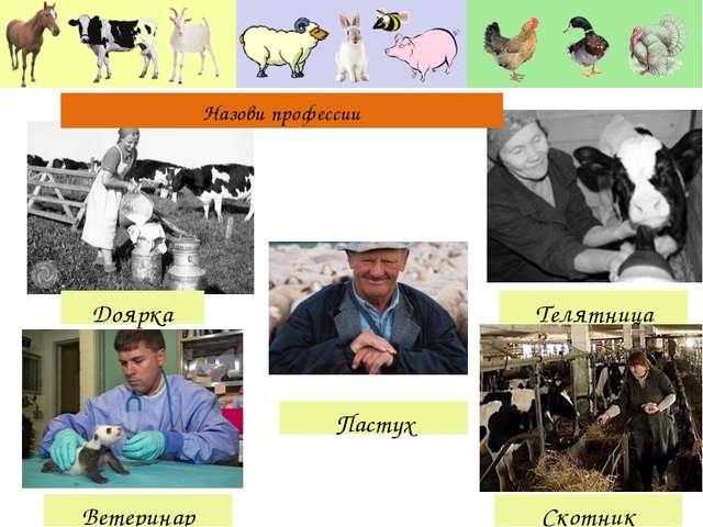 Доярка Телятница Ветеринар Скотник Пастух Назови профессии