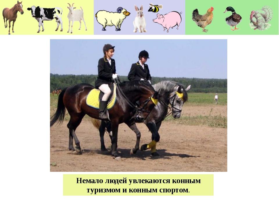 Немало людей увлекаются конным туризмом и конным спортом.