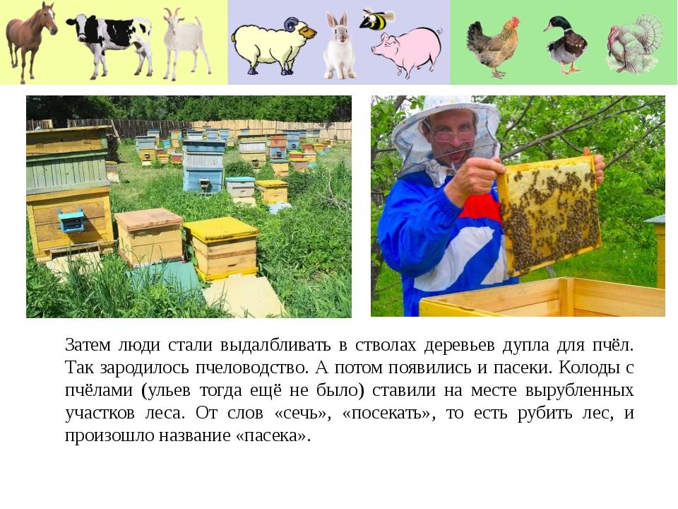 Затем люди стали выдалбливать в стволах деревьев дупла для пчёл. Так зародило...