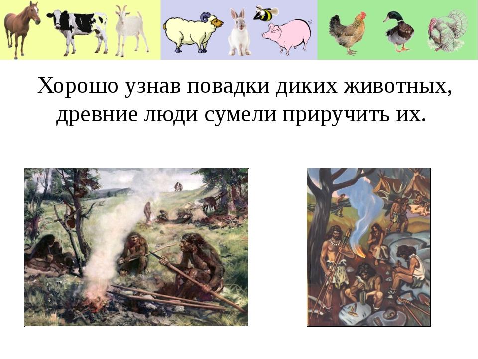 Хорошо узнав повадки диких животных, древние люди сумели приручить их. Хорошо...