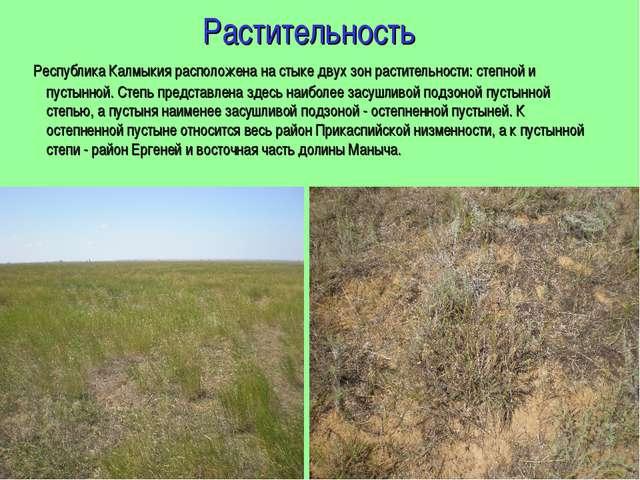 Растительность Республика Калмыкия расположена на стыке двух зон растительнос...