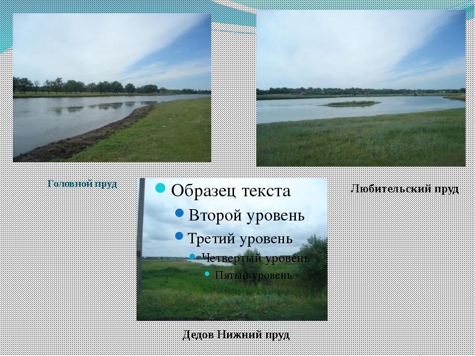 Головной пруд Дедов Нижний пруд Любительский пруд