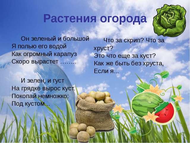 Растения огорода Он зеленый и большой Я полью его водой Как огромный карапуз...