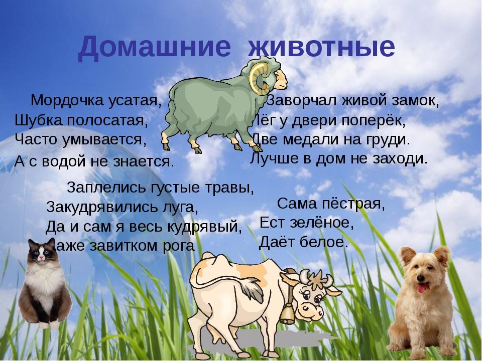 Домашние животные Мордочка усатая, Шубка полосатая, Часто умывается, А с водо...