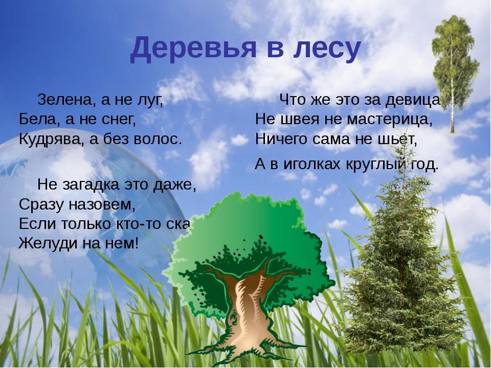 Деревья в лесу Зелена, а не луг, Бела, а не снег, Кудрява, а без волос. Не за...