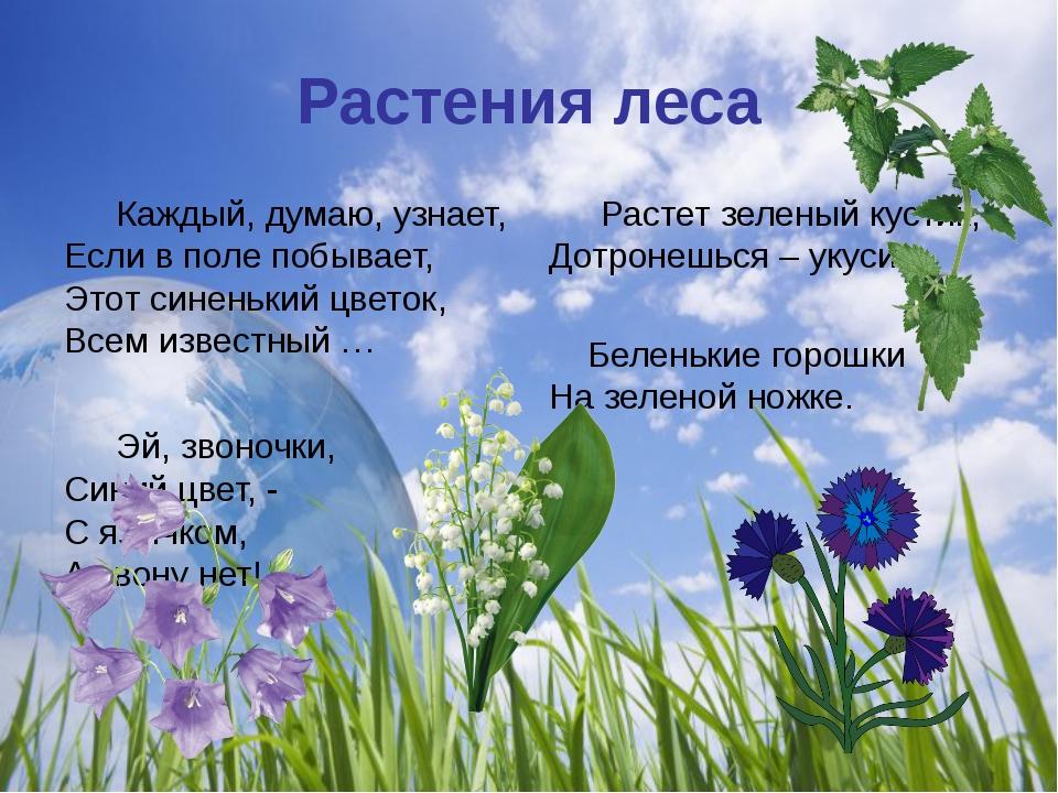 Растения леса Каждый, думаю, узнает, Если в поле побывает, Этот синенький цв...