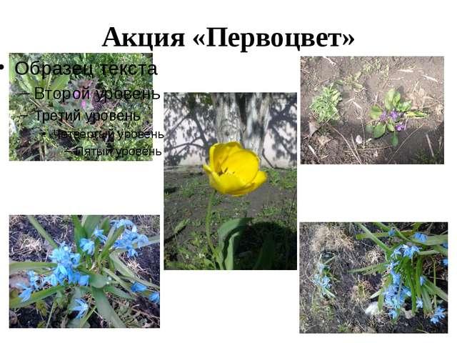 Акция «Первоцвет»