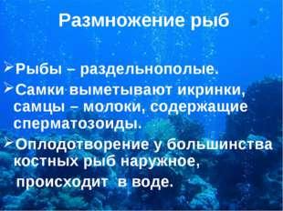 Размножение рыб Рыбы – раздельнополые. Самки выметывают икринки, самцы – моло