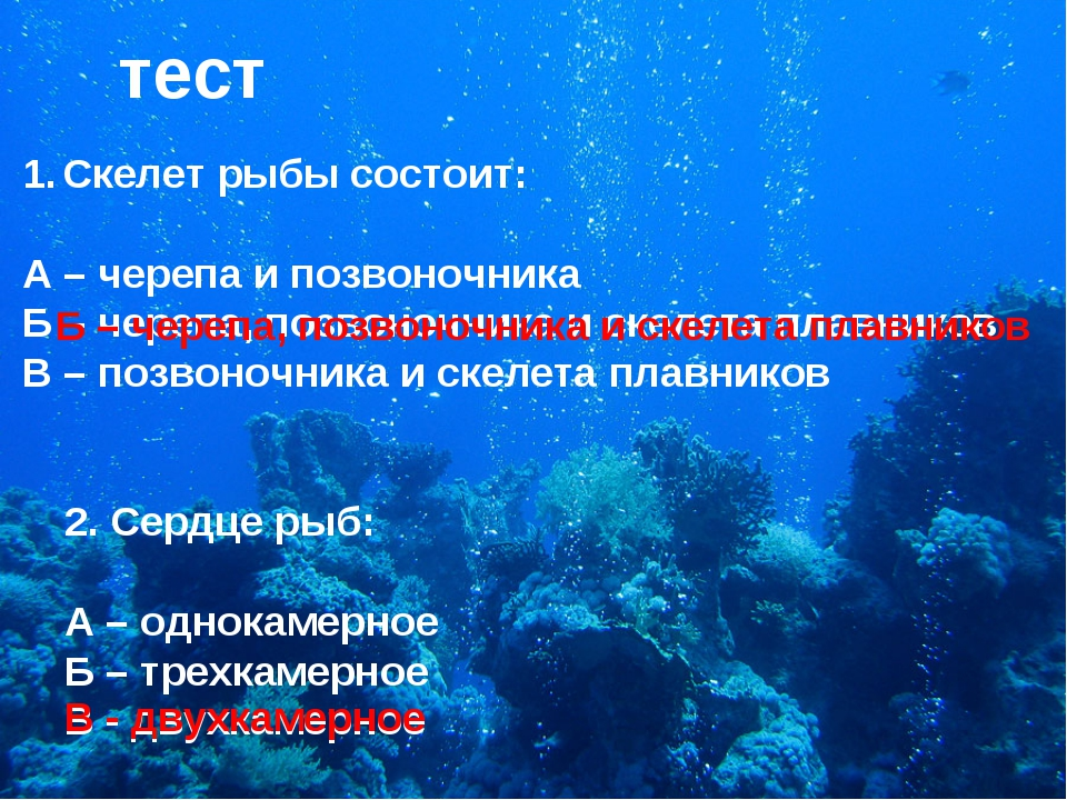 тест Скелет рыбы состоит: А – черепа и позвоночника Б – черепа, позвоночника...