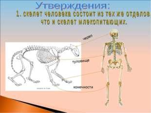 череп туловище конечности
