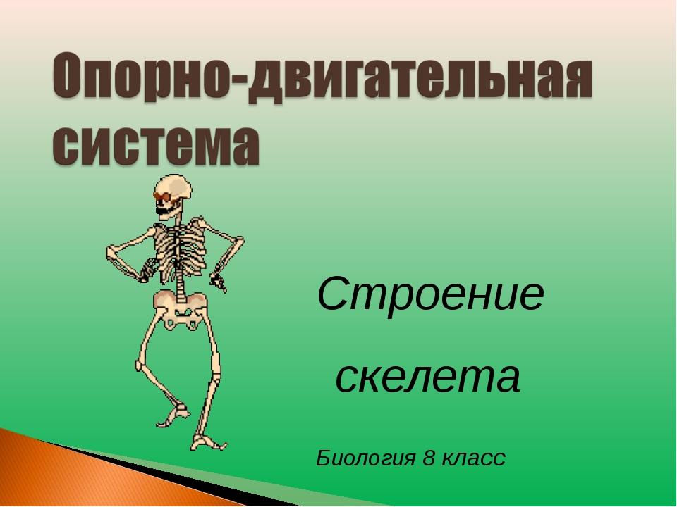 Строение скелета Биология 8 класс