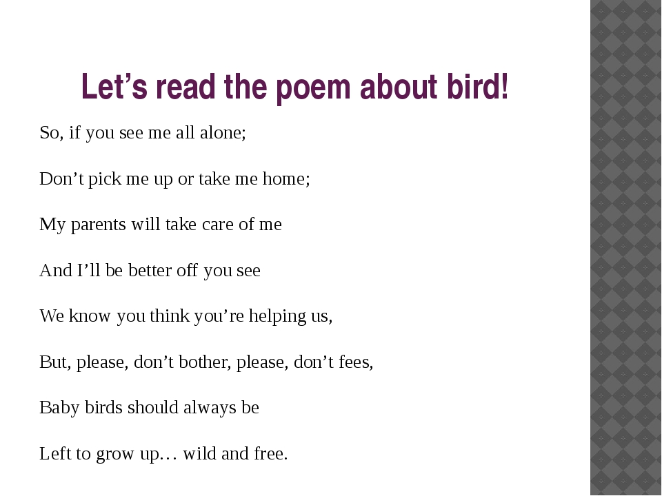 Let's read the poem about bird! So, if you see me all alone; Don't pick me up...