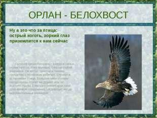 ОРЛАН - БЕЛОХВОСТ Ну а это что за птица: острый коготь, зоркий глаз приземлит