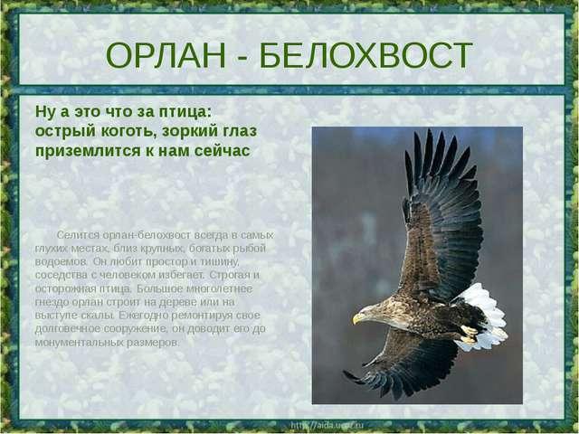 ОРЛАН - БЕЛОХВОСТ Ну а это что за птица: острый коготь, зоркий глаз приземлит...