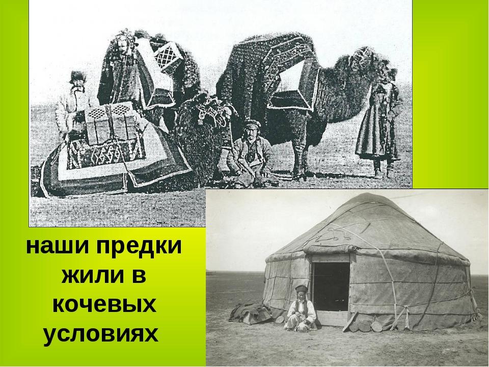 наши предки жили в кочевых условиях