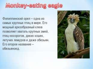 Филиппинский орел – одна из самых крупных птиц в мире. Его мощный аркообразны