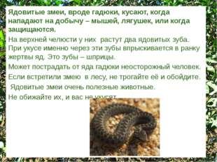 Ядовитые змеи, вроде гадюки, кусают, когда нападают на добычу – мышей, лягуше
