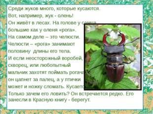 Среди жуков много, которые кусаются. Вот, например, жук - олень! Он живёт в л