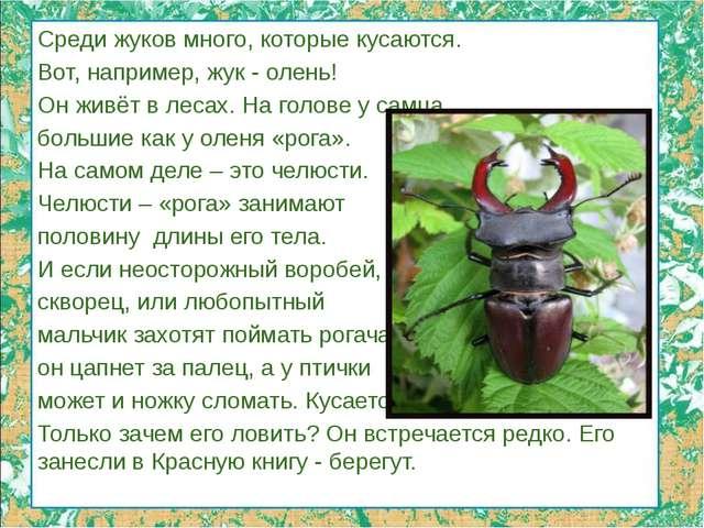 Среди жуков много, которые кусаются. Вот, например, жук - олень! Он живёт в л...