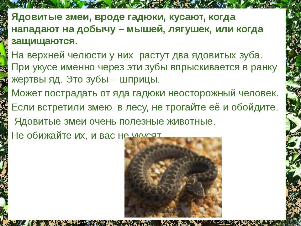Ядовитые змеи, вроде гадюки, кусают, когда нападают на добычу – мышей, лягуше...