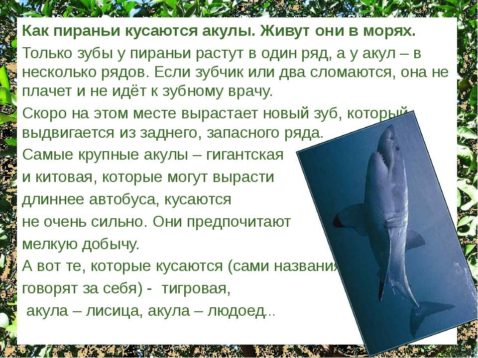 Как пираньи кусаются акулы. Живут они в морях. Только зубы у пираньи растут в...