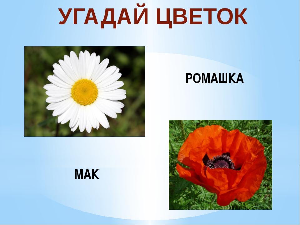 УГАДАЙ ЦВЕТОК РОМАШКА МАК