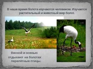 Весной и осенью отдыхают на болотах перелётные птицы. В наше время болота изу