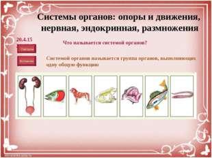 Система органов размножения Строение: Состоит из различных типов тканей. Орг