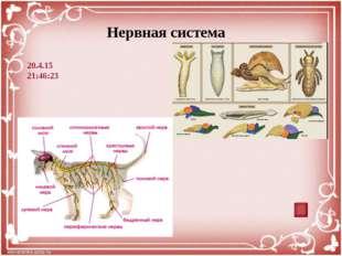 Система органов размножения