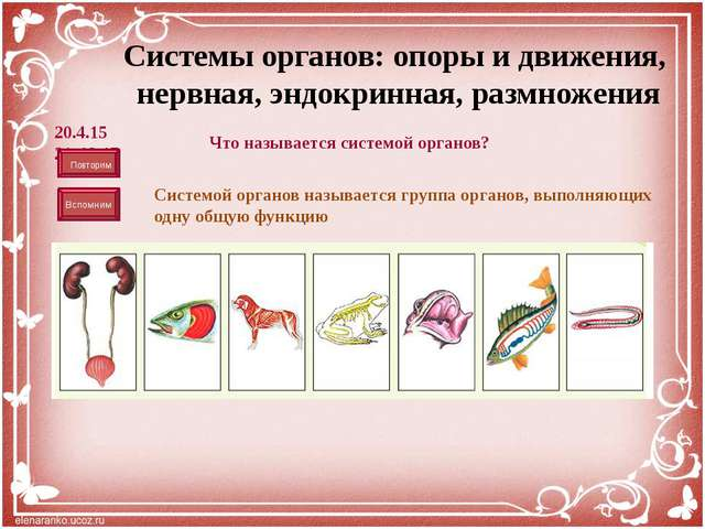 Система органов размножения Строение: Состоит из различных типов тканей. Орг...