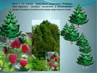 . Леса – это основа природного комплекса Мещёры. Они образуют мозаику экосис