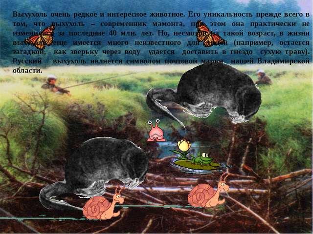 . Выхухоль очень редкое и интересное животное. Его уникальность прежде всего...