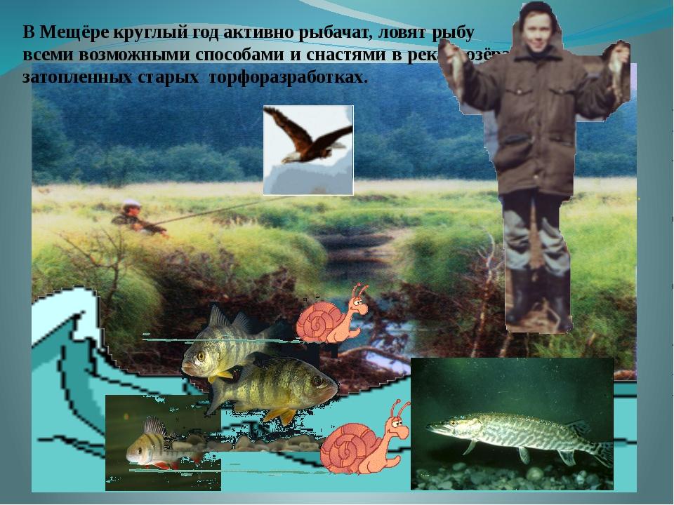. В Мещёре круглый год активно рыбачат, ловят рыбу всеми возможными способам...