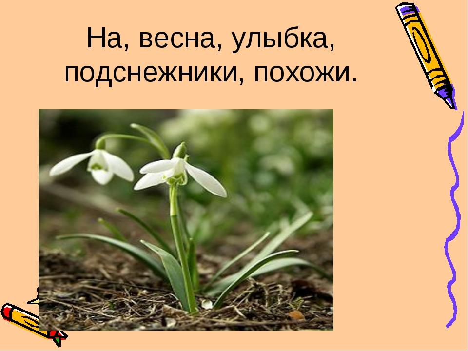 На, весна, улыбка, подснежники, похожи. Подснежники похожи на улыбку весны.